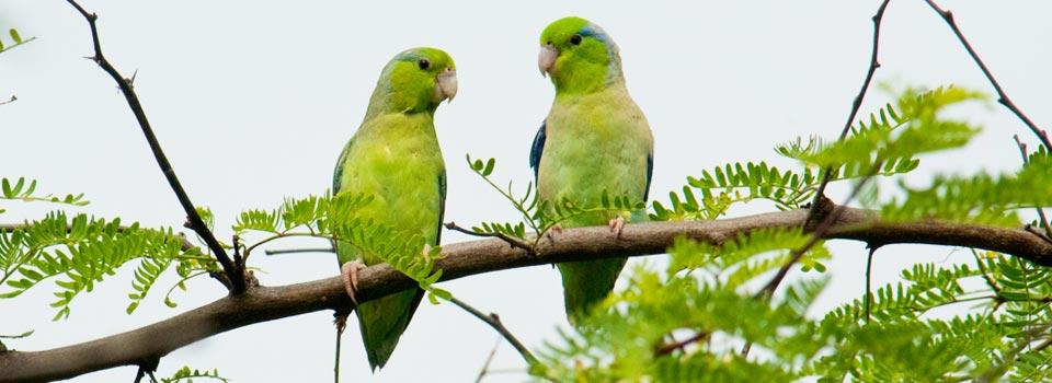 Despierta con el canto de las aves