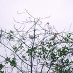 ibises-close-up