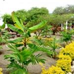 nuevas-plantas-el-jardin